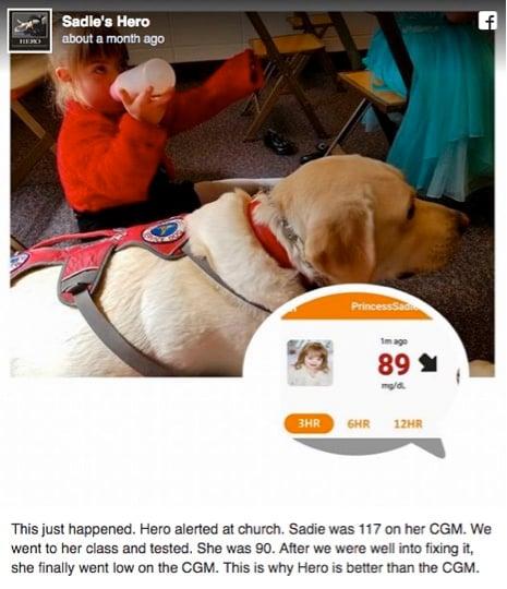 godupdates diabetic alert dog hero saves little girl sadie 2