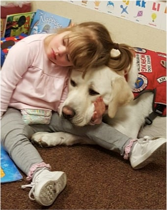 godupdates diabetic alert dog hero saves little girl sadie 5