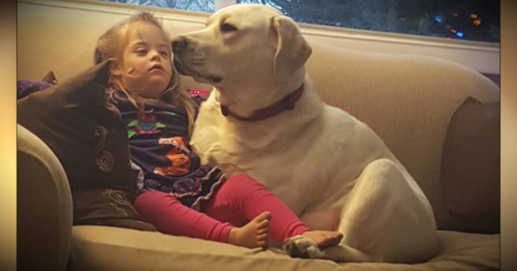 godupdates diabetic alert dog hero saves little girl sadie fb