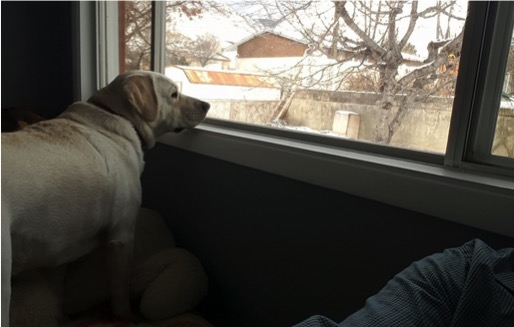 godupdates diabetic alert dog hero saves little girl sadie