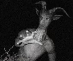 godupdates train warning goatman myth 2