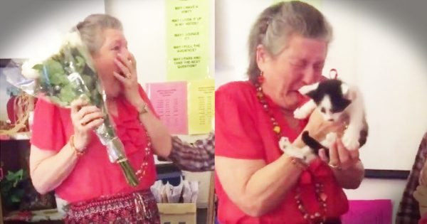 Students Surprise Beloved Teacher with Kittens