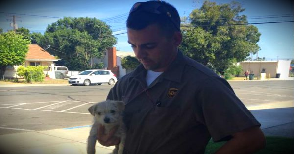 A UPS Driver Comes To The Rescue Of A Puppy Being Tossed Out Of A Car