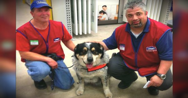 Job Offered By Lowe's To Unemployed Man And His Service Dog