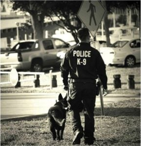 godupdates police officer's goodbye letter to fallen k-9 partner 3
