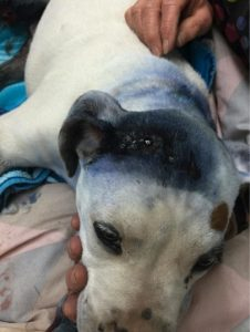 godupdates severely abused puppy comforted by fellow shelter dog 1