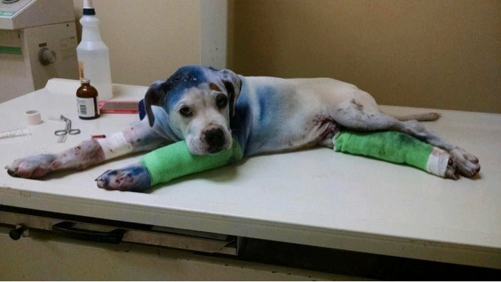 godupdates severely abused puppy comforted by fellow shelter dog 2