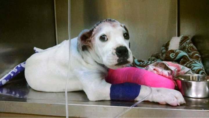 godupdates severely abused puppy comforted by fellow shelter dog 4