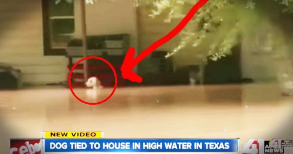 News Crew Rescues a Dog Tied up in Texas Flood
