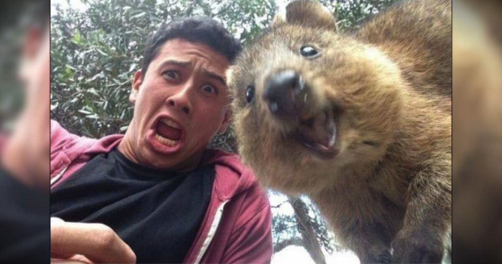 godupdates 12 animal photobombs 7