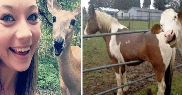 12 Animal Photobombs To Brighten Your Day