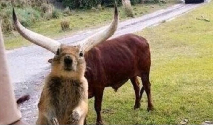 godupdates best 12 animal photobombs 2