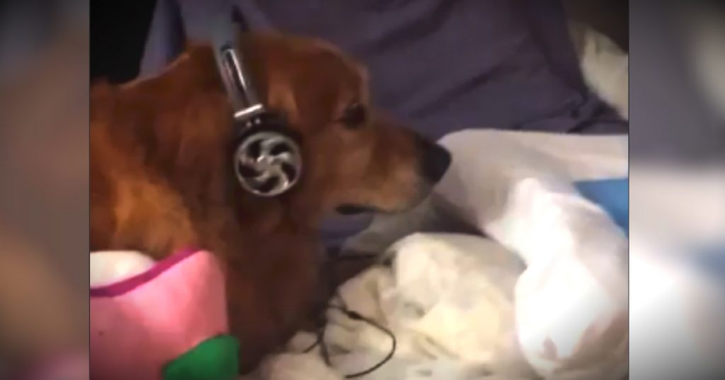 godupdates scared dog wearing headphones fb