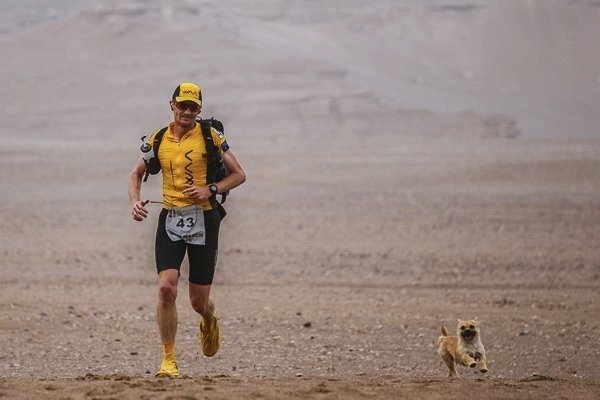 godupdates desert stray dog picks extreme marathon runner as her human 6