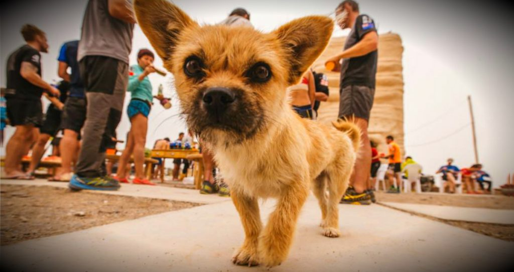godupdates desert stray dog picks extreme marathon runner as her human fb