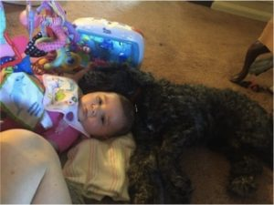 godupdates dog gave his life to save baby girl from fire 3