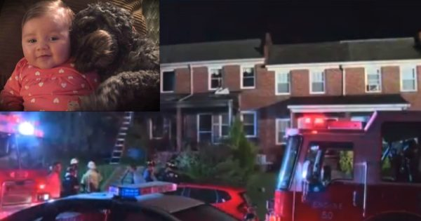 Dog Gave His Life To Save The Baby He Loved From A Raging Fire