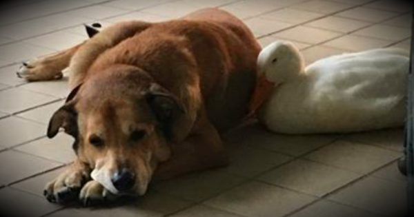 Grieving Dog Was Ready To Give Up, Until An Unlikely Friend Showed Up