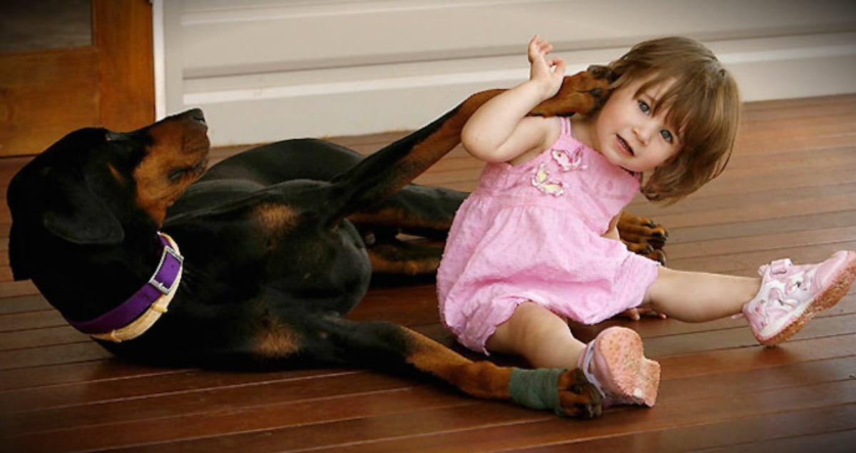 Heroic Dog bit by snake saves young girl