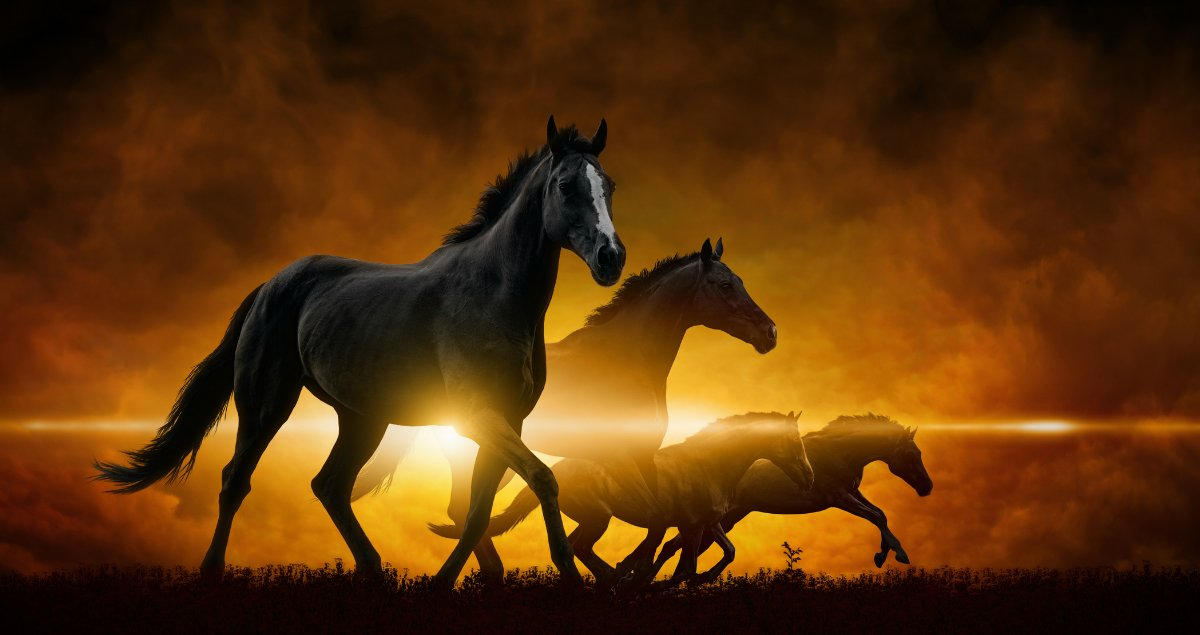 4 horses of the apocalypse  what they are and why they matter