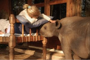 godupdates tiva and lola little girl gets rhino instead of puppy 4