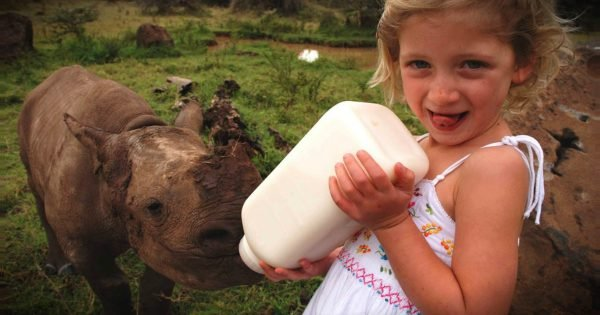 Little Girl Asked Her Parents For A Puppy And Got A Rhino Instead