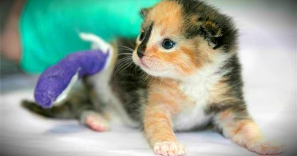 Kitten Amputee Brings Healing For A Disabled Veteran Battling PTSD