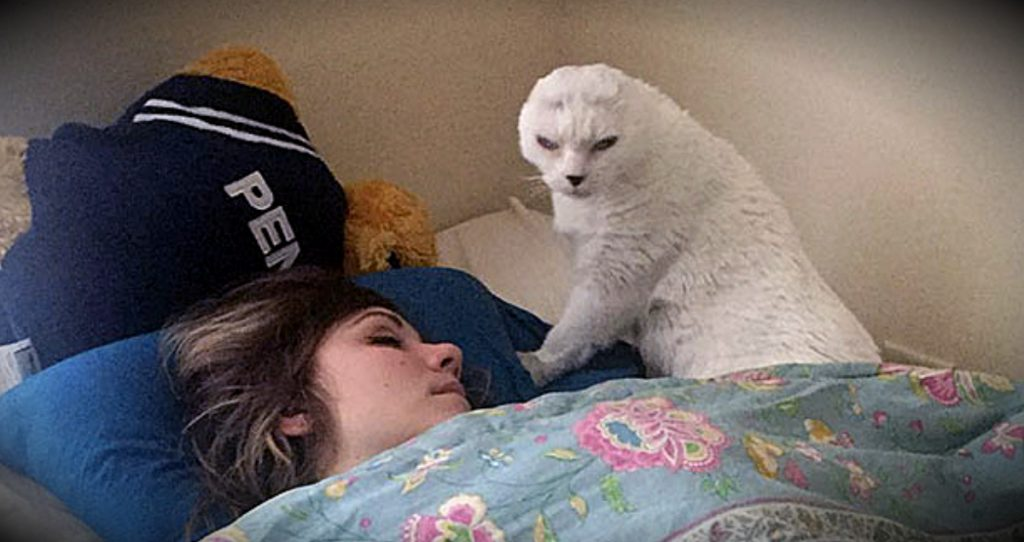 godupdates earless cat saves the woman who rescued him fb