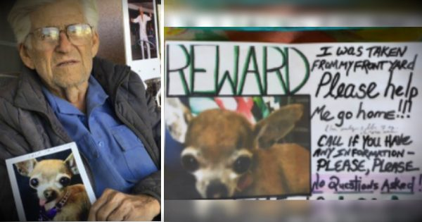 Internet's In An Uproar After 93-Year-Old Veteran's Beloved Dog Is Stolen