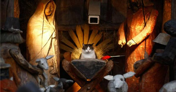 These 10 Cats Crashing Nativity Scenes Brought Me So Much Joy