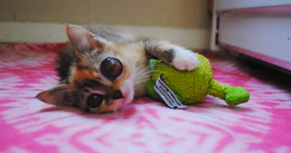 godupdates kitten with frog-like eyes gets loving home 1