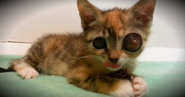 Stray Kitten With Frog Eyes Fights For Life And A Second Chance