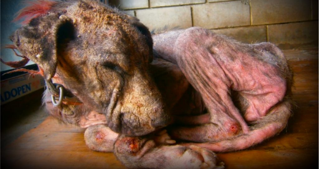 godupdates neglected dog thrown from a truck rosalie's journey fb
