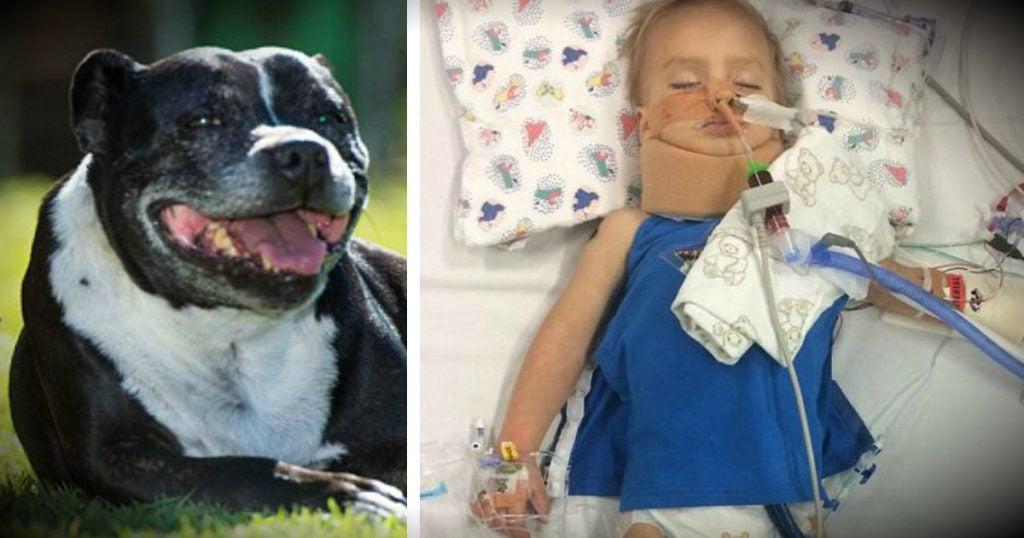 godupdates family dog led dad to drowning son FB