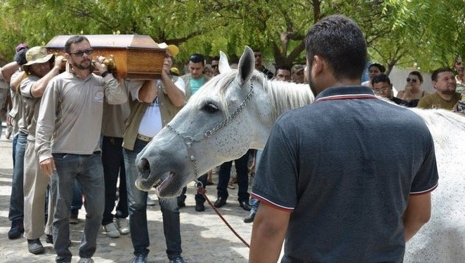 godupdates horse grieving his owner's death at funeral 2