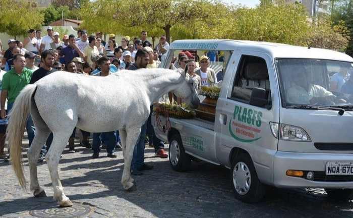 godupdates horse grieving his owner's death at funeral 3