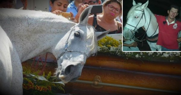 Heartbroken Horse Grieves Deeply At His Human's Funeral