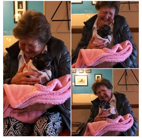 godupdates lonely grandma adopted a senior chihuahua 1