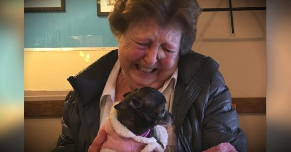 Put A Lonely Grandma With A Love-Starved Dog And You Get Pure Joy