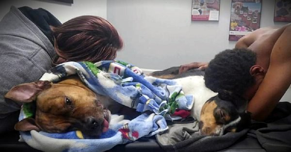 Devastated Family Urges All Pet Owners To Learn Signs Of Poisoning