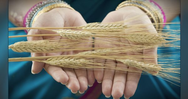 The Book Of Ruth: Much, Much More Than A Love Story