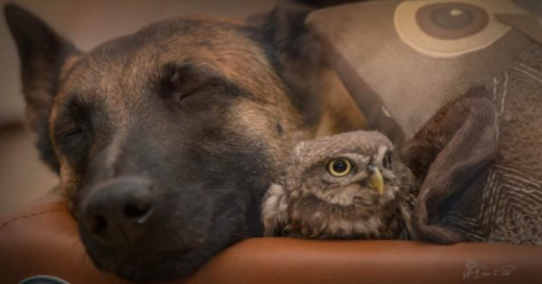 A Dog And Owl Make The Unlikeliest Of Pals, But Also The Sweetest