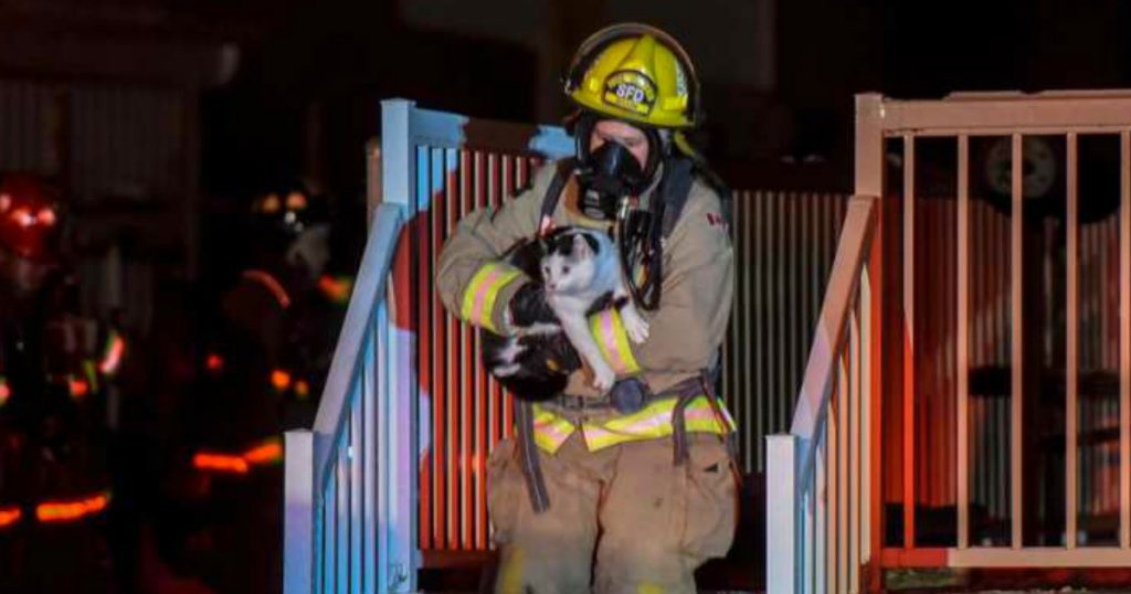 godupdates Heroic Cat Saved The Entire Family From A House Fire By Biting Mom fb