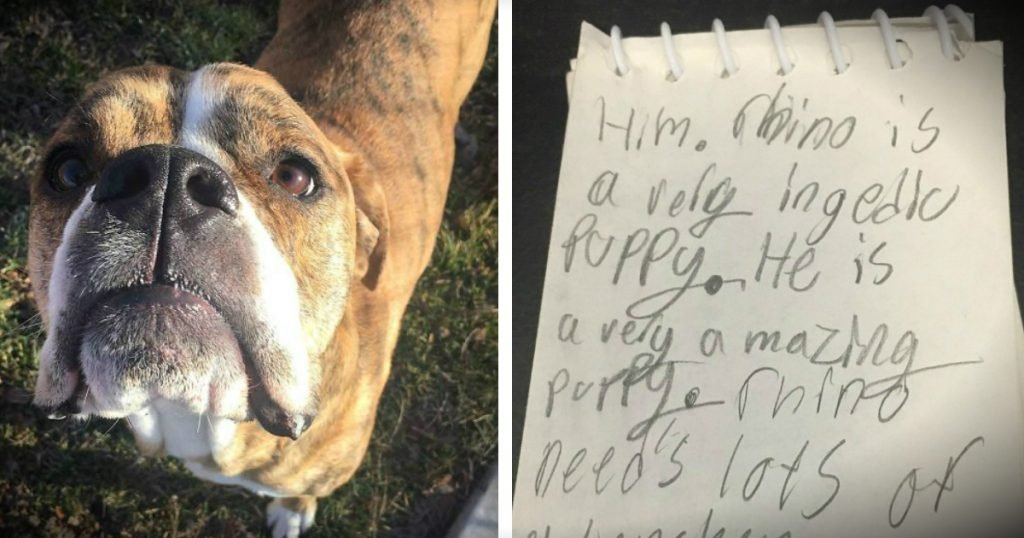 godupdates Rescue Dog Returned To Shelter With Heartbreaking Letter Attached fb