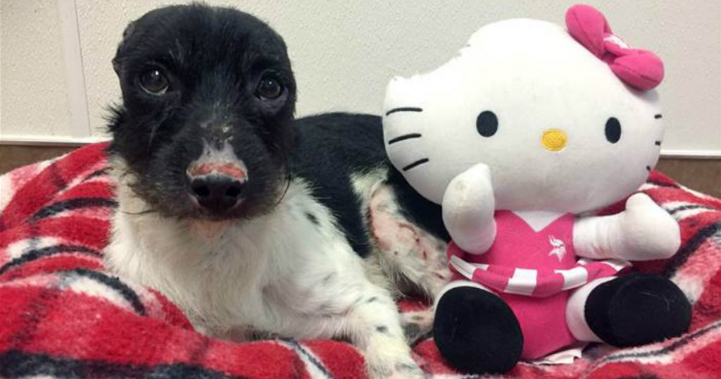 godupdates earless dog gets stuffed hello kitty doll 1