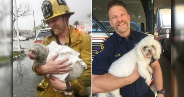 Firefighter Pulls Lifeless Dog From Burning Building And Does CPR