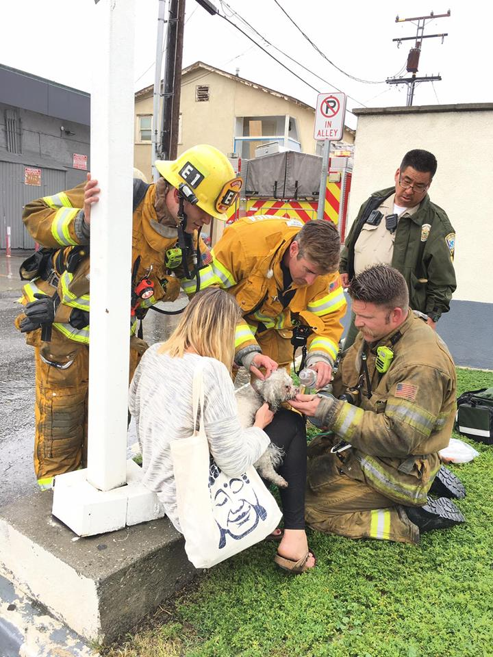 Firefighter Pulls Lifeless Dog From Burning Building And Uses CPR To Bring Him Back _ godupdates