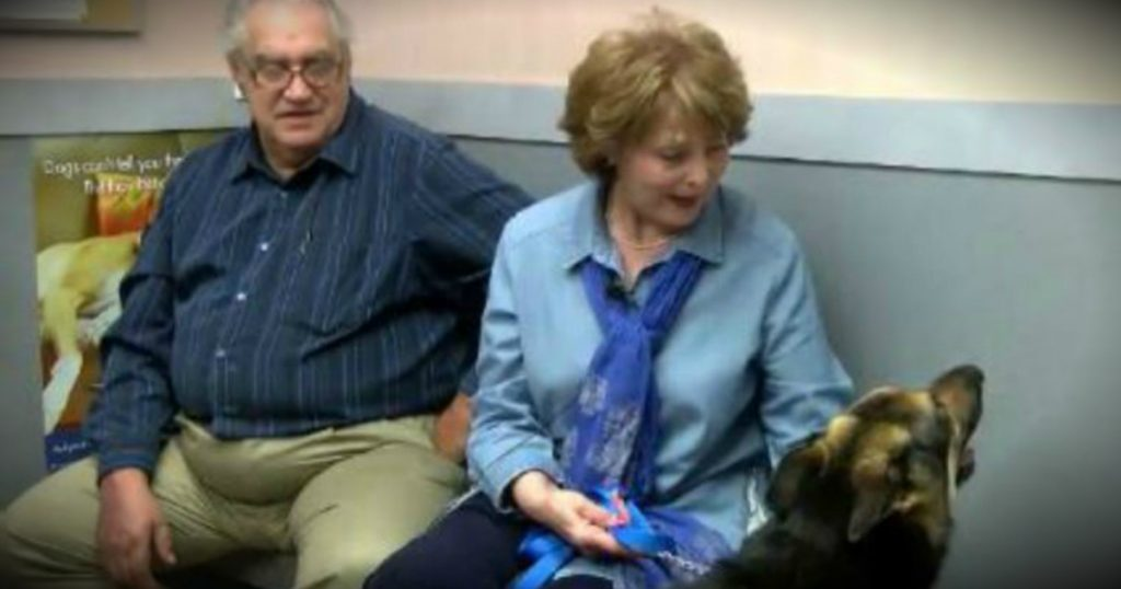 godupdates missing german shepherd miraculously shows up on doorstep 4 years later fb