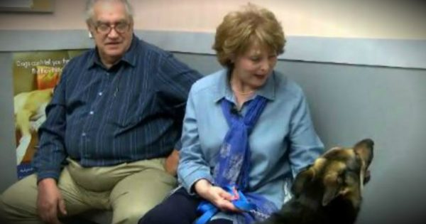 Dog Goes Missing For 4 Years, Then Miraculously Shows Back Up