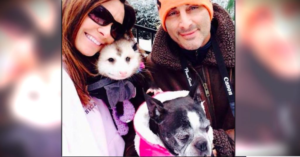 godupdates rescued opossum joins woman's family fb